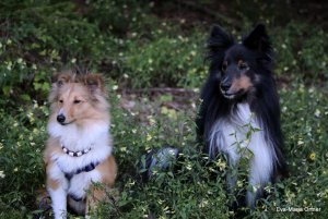 AUTOR: - | TITLE: - | DESCRIPTION: Blumenhunde Darina und Buzz